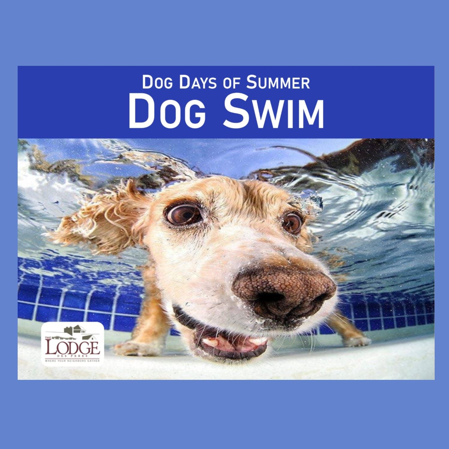 Dog Days of Summer Dog Swim Spotlight